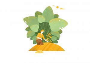 illustration for coffee farmer